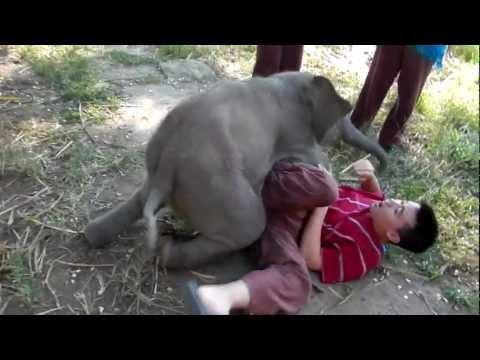 Tierno bebé elefante al que le gusta acurrucarse