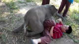 Bebê Elefante Adora Fazer Carinho