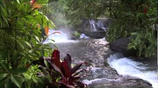 Costa Rica is one of most highly valued tourist destinations in this planet. This small piece of land includes all of the necessary...