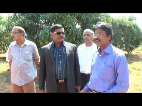 ICAR-IIHR NICRA Field trials on Flower Induction in Mango