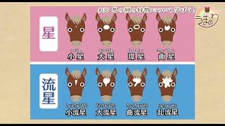 #30 馬の顔の特徴について学ぼう!