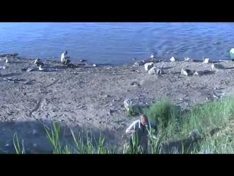 рыбалка видео в чограйском видео