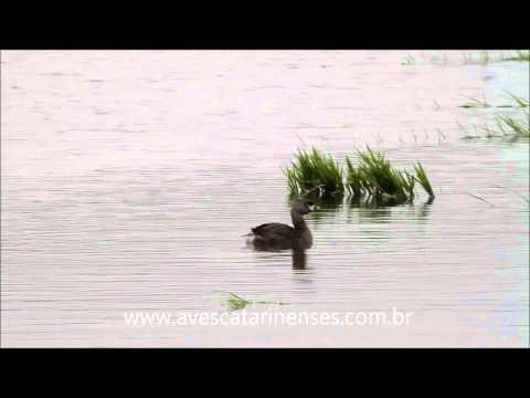 Mergulhão-caçador - Cristiano Voitina