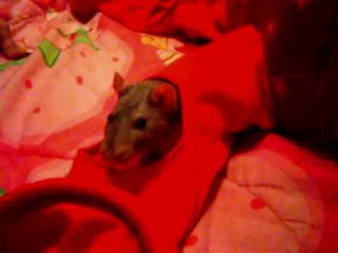 My Hannibal The Cannibal_0001.wmv