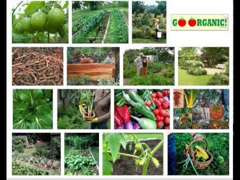 Organic Gardening – 10 Practical Steps
