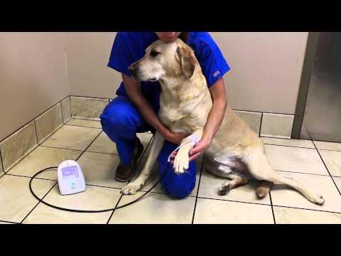 SunTech Vet20: Het maken van een bloeddrukmeting bij katten en honden (3 van 4) [Engels]