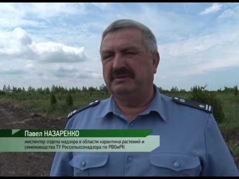 О мониторинге вируса - шарки сливы в Ростовской области