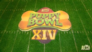 See The Puppy Bowl Stadium Built From Scratch In This Timelapse Video by Animal Planet
