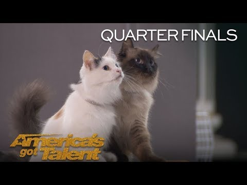 The Savitsky Cats Amazing Trained Cats Jump Through Hoops   America's Got Talent 2018