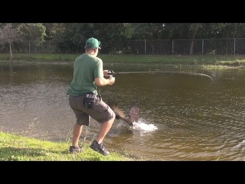 CRAZY - FISH ATTACK ON LURE RAPTOR BIRD ATTACK ON FISH ! 1080p HD