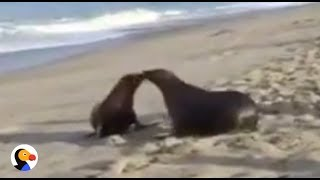 LIVE: Wild Sea Lion Release | The Dodo LIVE