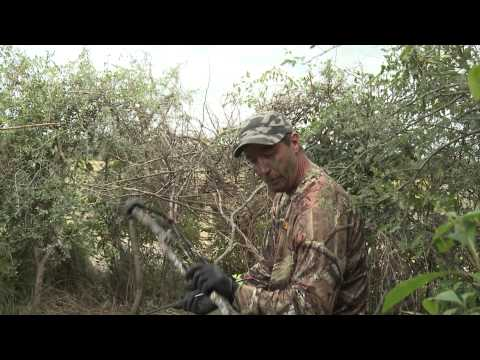 hunter - If you've never watched doves being shot from flight, you gotta see this. Amazing shooting unlike anyone has ever seen. All done with a bow...- Like Tim Well...