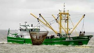 Nov 4, 2013 ... ROYAL FRYSK DCZY IMO 9284099 HOO 70 Fishing Vessel Krabbenkutter nHooksiel Germany .... Rope mussel harvest, West Cork, Ireland.