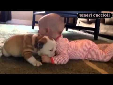 baci e coccole a volontà tra un bimbo e un bulldog