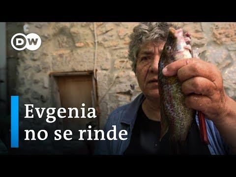 Grecia: peces pequeños causan grandes problemas | DW Documental