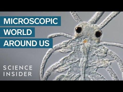 Award-Winning Footage Of The Microsopic World Around Us