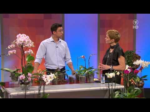 Orchideen Gärtner: Josef Seidl - ARD-Buffet Orchideen m ...