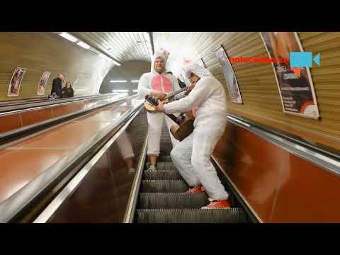 Králíci v metru