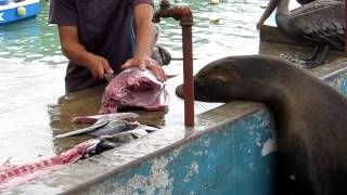 Pelican Gets Fish Head Stuck In His Throat, Fish Seller Helps Out