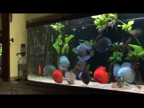 Fish tank maintenance youtube trailer 2017 fish tank for Fish tank trailer