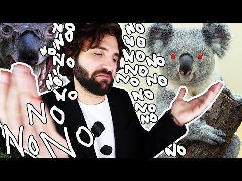 Quello che NON volevi sapere sul Koala - SCIENZA BRUTTA