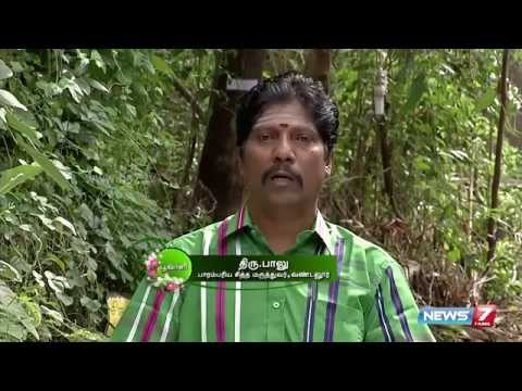 How to grow  Kaattu Karunai  which is a remedy for piles | Poovali | 25-11-2015