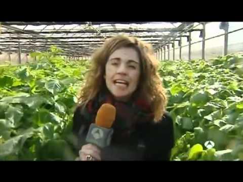 Aeroponía: Producción de patatas de siembra sin tierra
