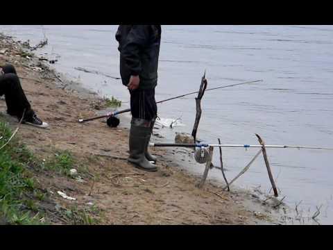 видео ловля сазана на донку с берега видео
