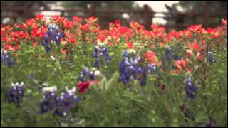 Fredericksburg (TX) United States  city images : Wildflowers in the Texas Hill Country: Visit Fredericksburg TX