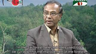 International Day of Forests 2017.