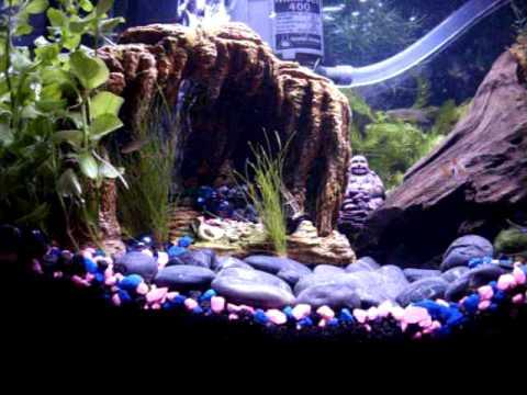 Underwater River and Brine Shrimp farm