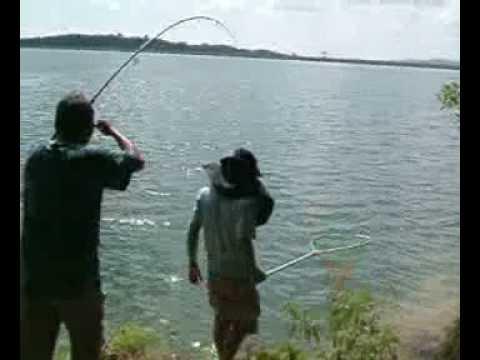 ตกปลาตะเพียนใหญ่-เขื่อนขุนด่าน Fishing