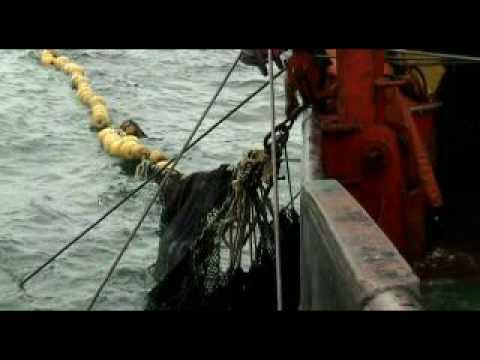 orka - lance completo. pesquero pesca de cerco purse seiner fishing vessel sardina