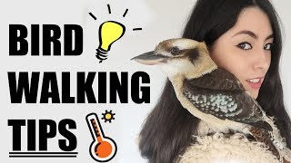 How I Walk My Pet Birds | EMZOTIC by Emzotic