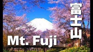春の富士山と桜