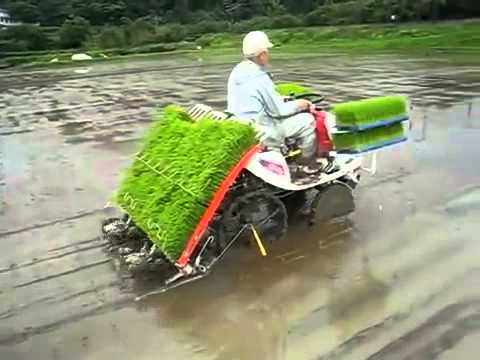 Máy cấy lúa công nghệ hiện đại của Nhật Bản