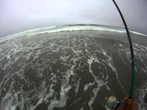 19.5″ Spotfin Croaker – CA