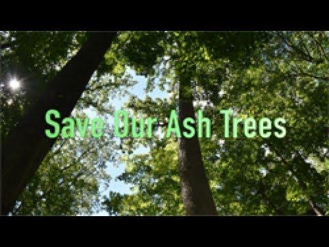 Save Our Ash Trees - Emerald Ash Borer