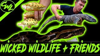 Video HUNTING FOR PYTHONS & CHECKING OUT CRAZY REPTILES! MP3, 3GP, MP4, WEBM, AVI, FLV Agustus 2019