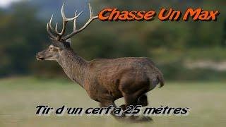 Tir D'un Cerfà 25 Mètres Et Tir De Sanglier / Chasse Au Sanglier Et Cerf