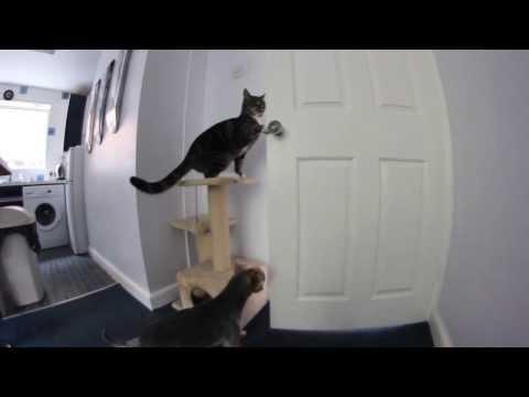 超完美脫逃!貓幫狗開門