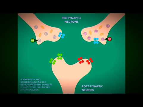 Mechanism of action of Bupropion