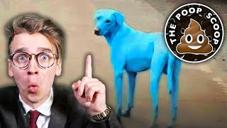 BLUE DOGS?! how and why?