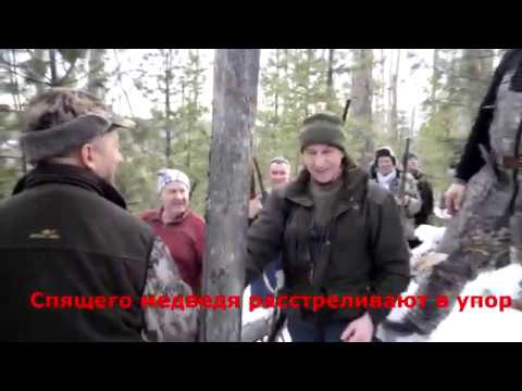 Как губернатор Левченко медведя застрелил