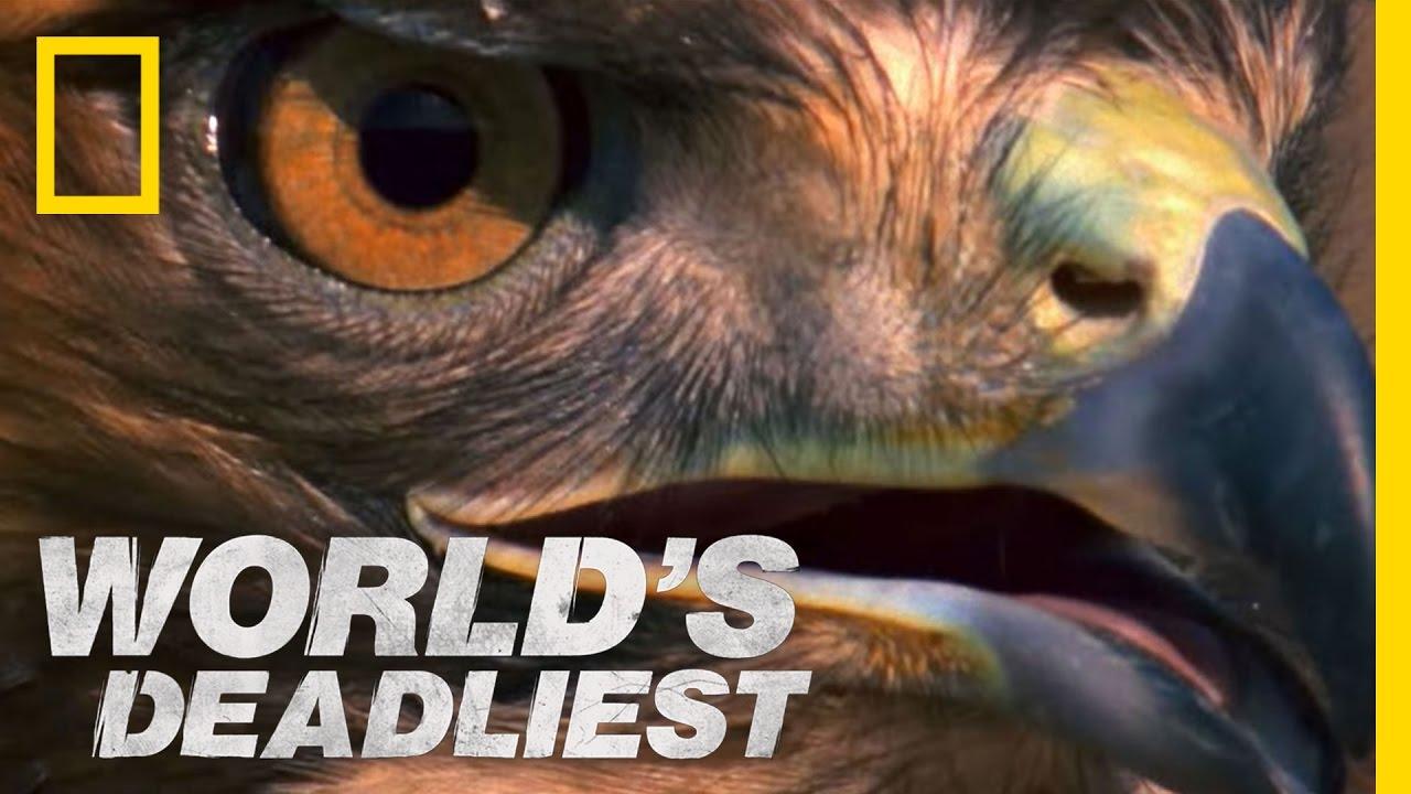 World's Deadliest – Rattlesnake vs. Hawk
