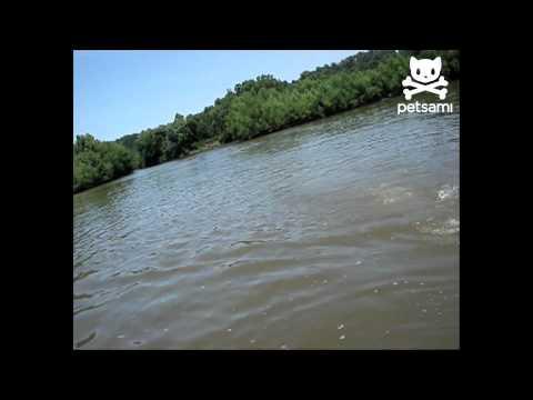 Vergonzoso Fail de pesca
