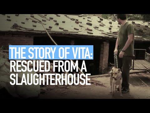La storia di Vita, cane salvato da un mattatoio cinese