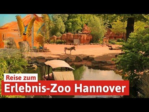 Hannover: Erlebnis-Zoo Hannover: Reise in die Welt der Tiere, Spar mit! Reisen