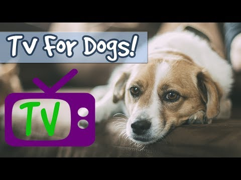 Video TV FOR DOGS! 5 Hour Playlist, Soothing Nature Footage Combined with Relaxing Music for Calming Dogs! download in MP3, 3GP, MP4, WEBM, AVI, FLV January 2017