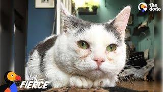 Cat with Short Legs Looks Like a Tiny Potato - GISELLE aka STUMPY | The Dodo by The Dodo